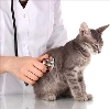 Ветеринарные клиники в Барыше